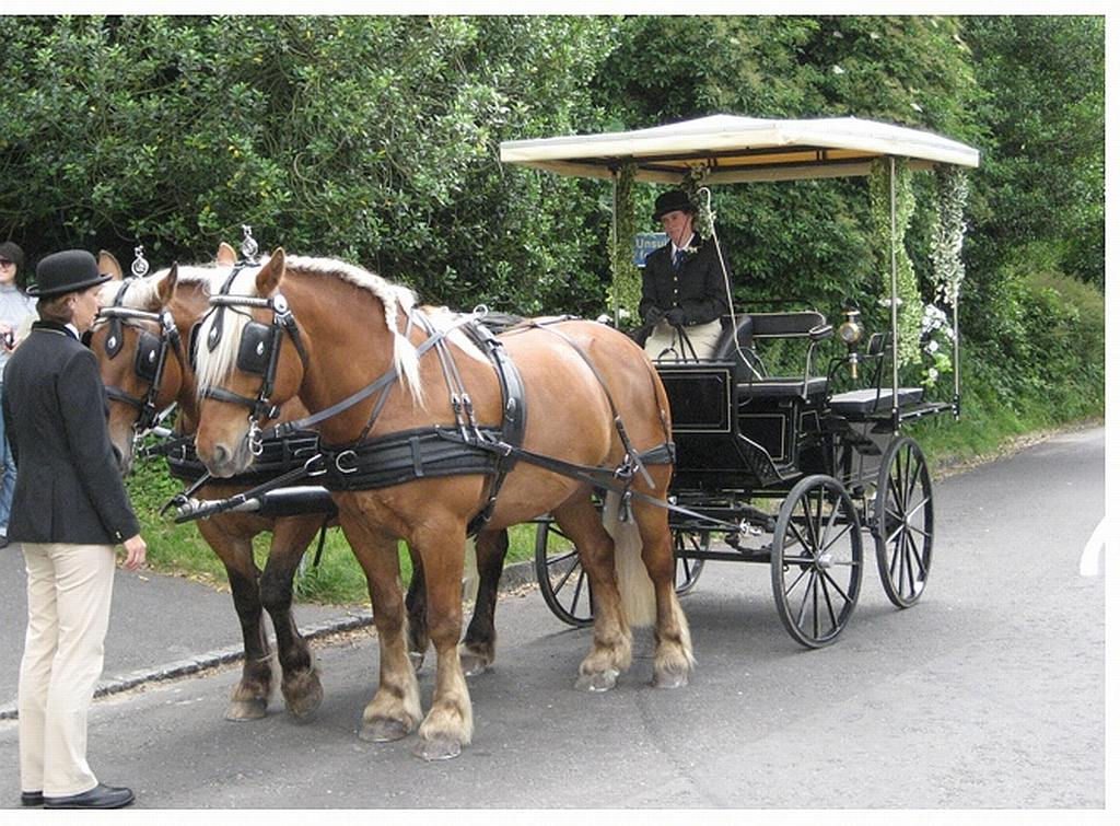 Horse Drawn Carriage Wedding Horse And Carriage Wedding