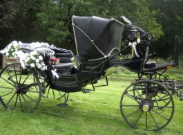 Horse and Carriage for weddings in Petersfield