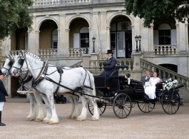 Horse and carriage hire for weddings in Southampton